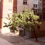 recons amb arbres fruites